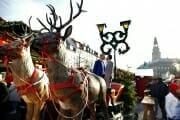 Christmas Wedding photo at market in Copenhagen.